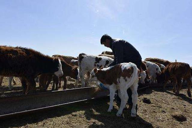 宁波推进绿色畜牧业发展 创建畜牧业绿色发展示范县