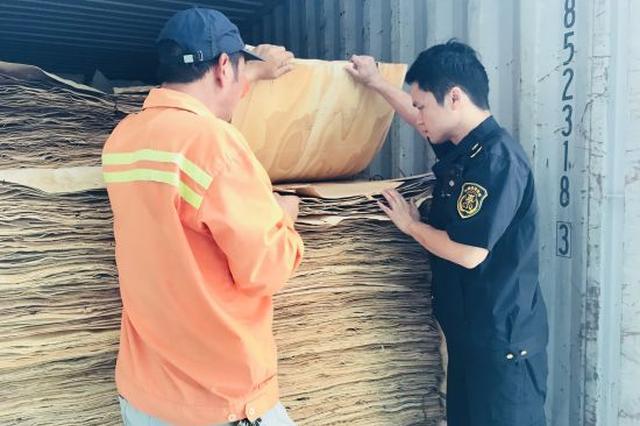 宁波口岸首次在进口人造板中截获检疫性有害生物