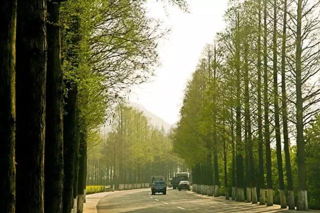 329国道富春江路至陈华段将改建 双向6车道
