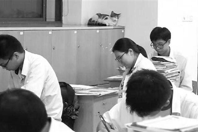 这群流浪猫是去是留 宁波1中学学生成立课题组