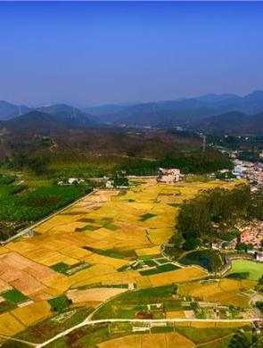 水稻熟了 航拍广东鱼米之乡