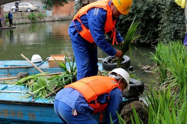 宁波城管为河道化春妆 多种水生植物即将扮靓内河