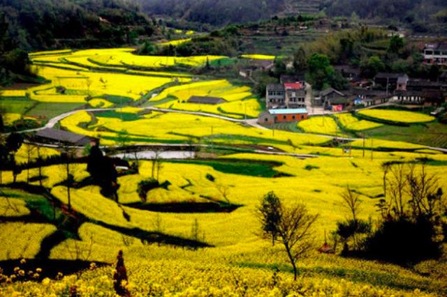 美若仙境2600亩油菜花海 今年宁波油菜花攻略约起