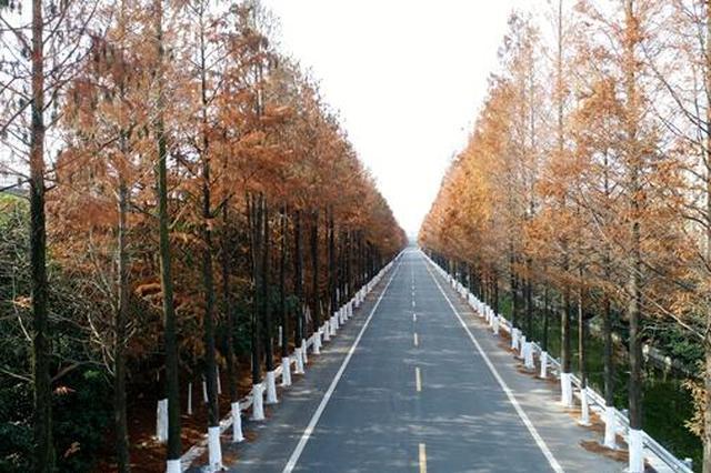 修1条走廊串一路风景 江北打造16条美丽经济交通走廊