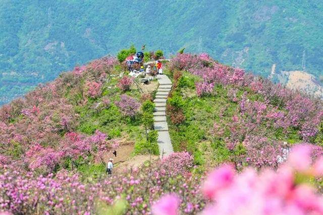 奉化金峨杜鹃花文化旅游节启幕 4万游客入山赏美景