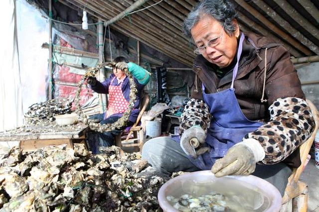 挑了几个牡蛎竟感染创伤弧菌 鄞州八旬老人险些丧命