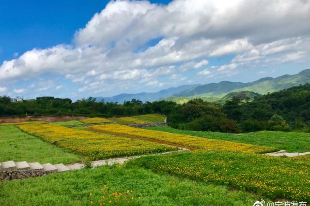 余姚大岚七彩山丘花海正绚烂 花期持续到8月
