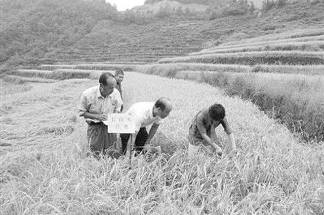 宁波千名智多星下乡种黄金 帮助农户每亩增收3万元