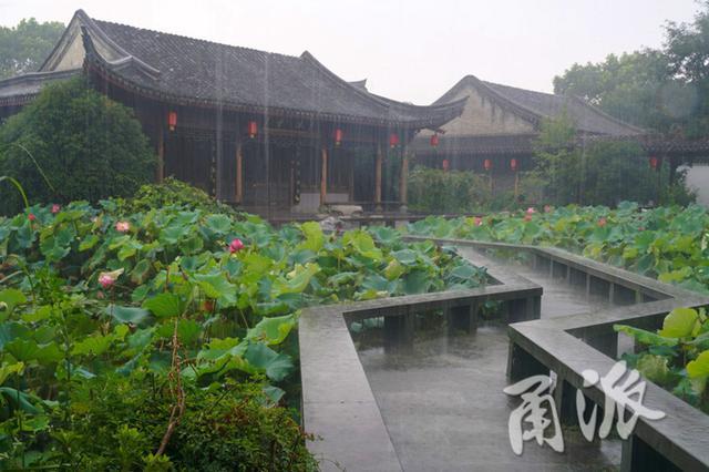 台风云雀带来阵雨 宁波梁祝文化园荷塘赏荷别样风情