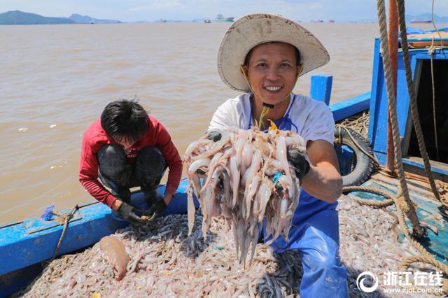 舟山虾虫孱喜获丰收 一天可收获虾虫孱1000多公斤