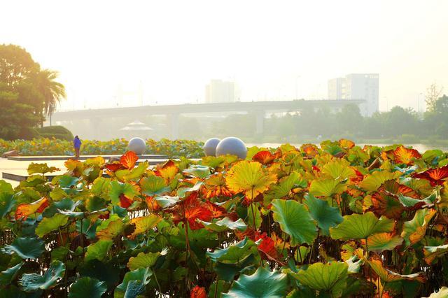 甬城进入秋季各色光影斑斓 粉饰着这座城的秋意浓