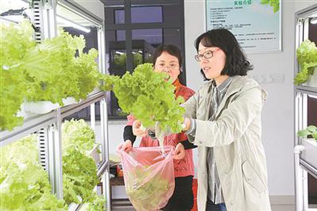 甬1中学有个无土栽培实验室 培养创新实践也带来欢乐