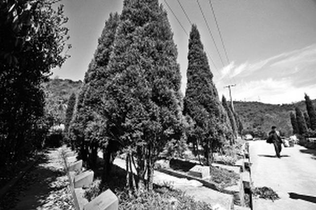 宁波97岁老人亲往观摩树葬 每棵树下可葬48位逝者