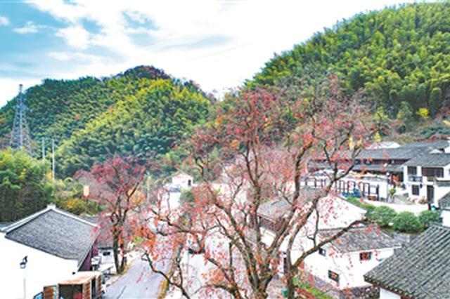 宁波探索出打开两山转化通道20招 乡村振兴产业是关键