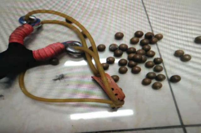 弹弓打鸟属于违法行为 奉化警方破获多起非法猎鸟案
