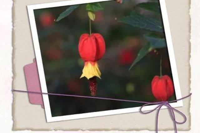 宁波各地元宵灯会开放 这些植物花灯百闻不如一见