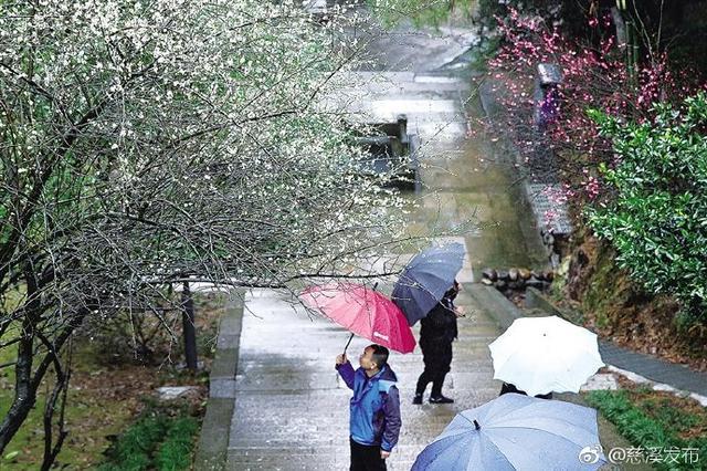 慈溪峙山公园雨中梅花别样美