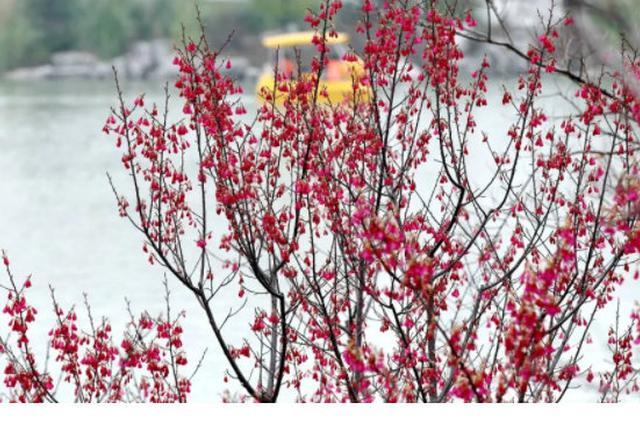 宁波阴雨模式重启 降水从?#20013;?#24615;向间歇性转变