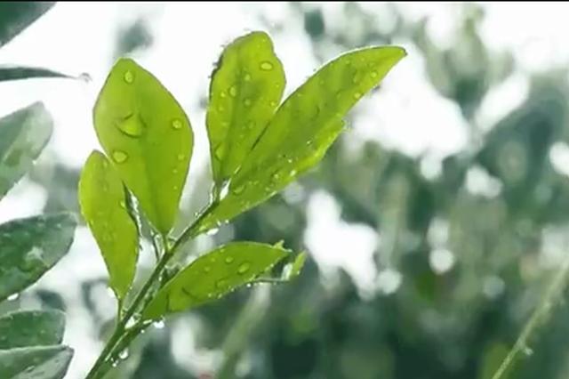 宁波惊蛰前出现春雷 未来一周我市阴雨天气持续