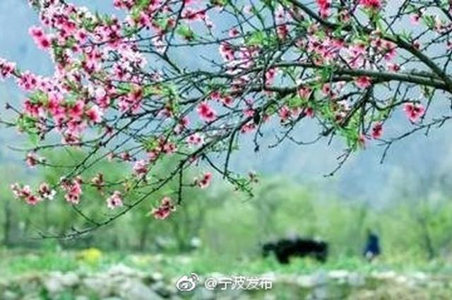 宁波昨日正式入春 接近常年3月12日同期
