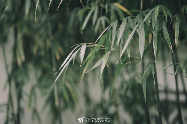宁波最高温有望突破2字头 进入气象意义上的春天