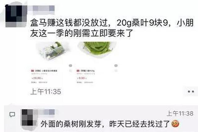 养10条蚕宝宝花2500元 杭家长:自己吃不好还要操心虫