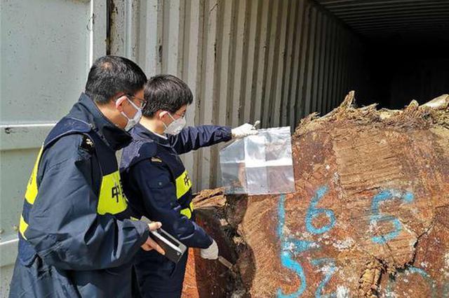 宁波海关从圭亚那黄膜瓣豆木原木中截获活体有害生物