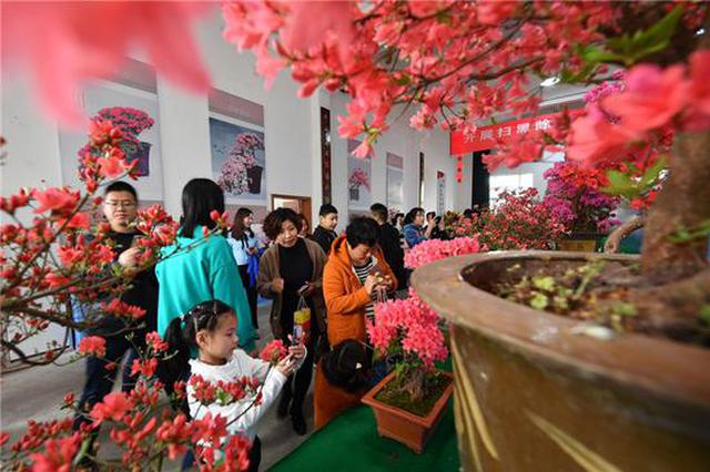 浙江宁海打造美丽庭院升级版 刷新生态新颜值