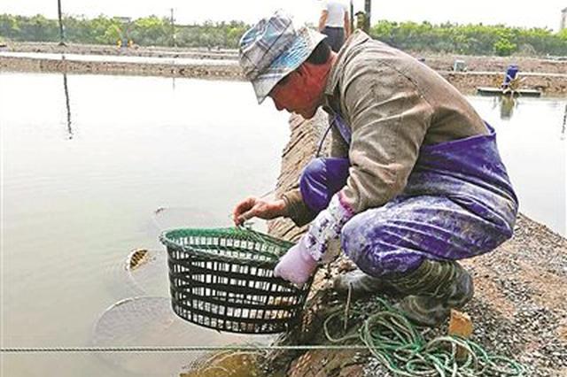 象山港畔千亩蟹塘迎来育苗季 轮养方式赋予更高效益