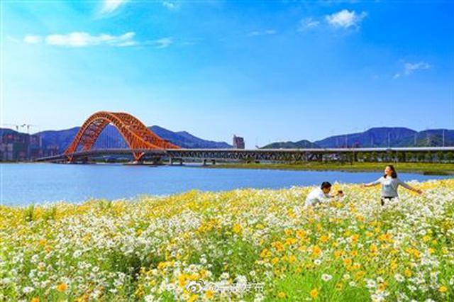 宁波梅山花海盛开美如画卷 吸引不少市民前去打卡