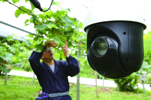 象山物联网孕育智慧果园 积极打造市民放心果园