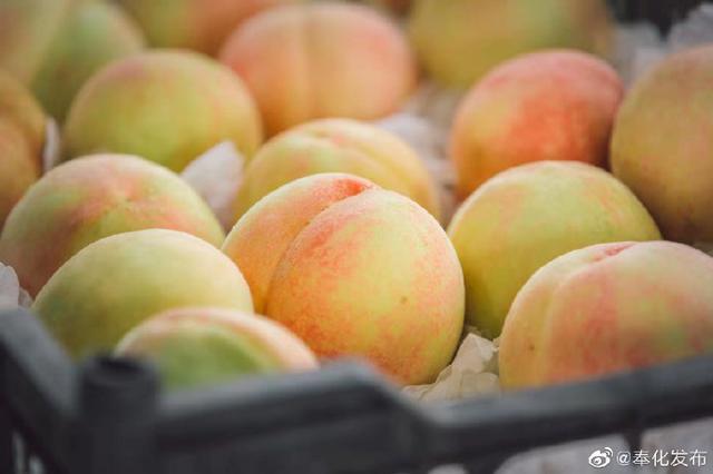 奉化溪口水蜜桃正当时 与4000多家水果店实现强强合作