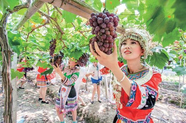 象山晓塘乡葡萄节本周日开启 全乡种植面积达6000亩