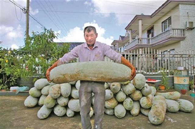 65公斤 象山定塘農戶種出冬瓜巨無霸