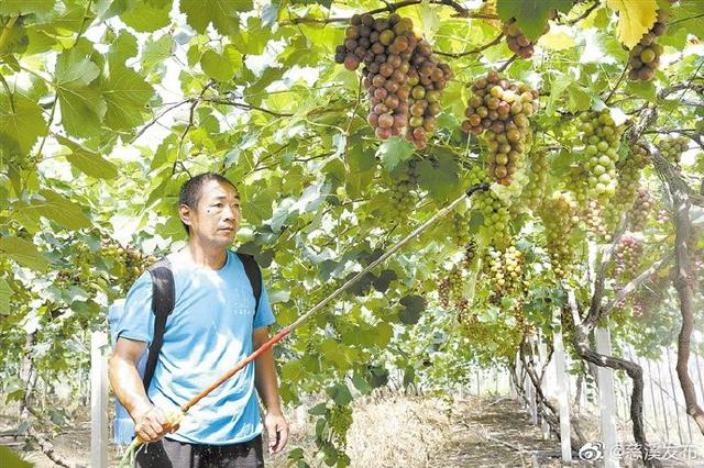 慈溪抓紧开展农业灾后建设 农户积极自救减少损失
