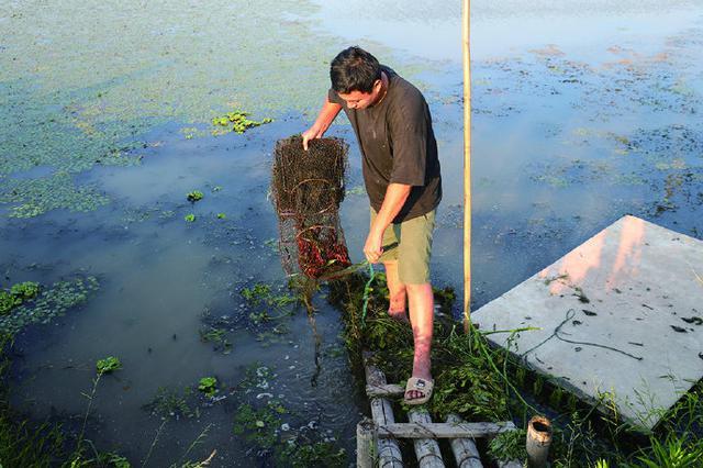 象山西周小龙虾受台风影响价格走高 今年已销售7万吨