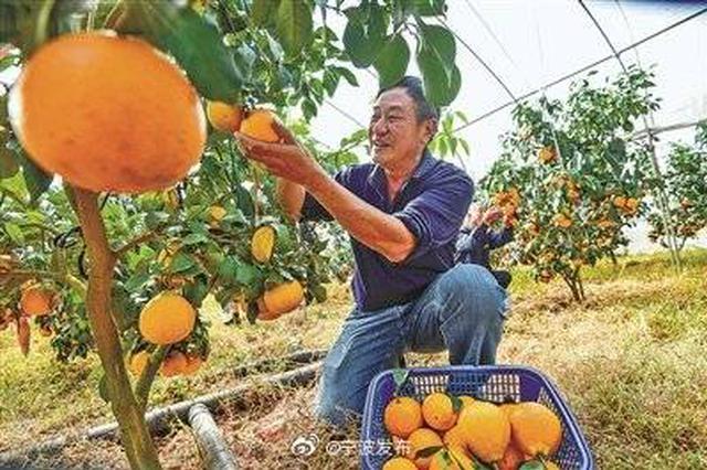 第三届象山柑橘文化节启幕 象山柑橘品牌得到推广