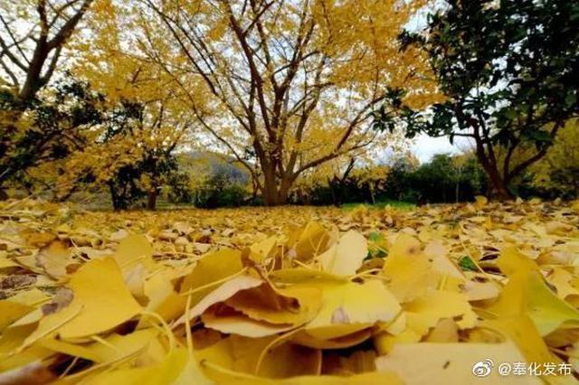 奉化喊你来欣赏金黄世界 错过等一年
