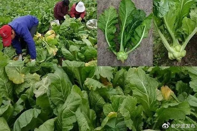 宁波4个农产品上榜中国农业品牌目录 数量居全省第一