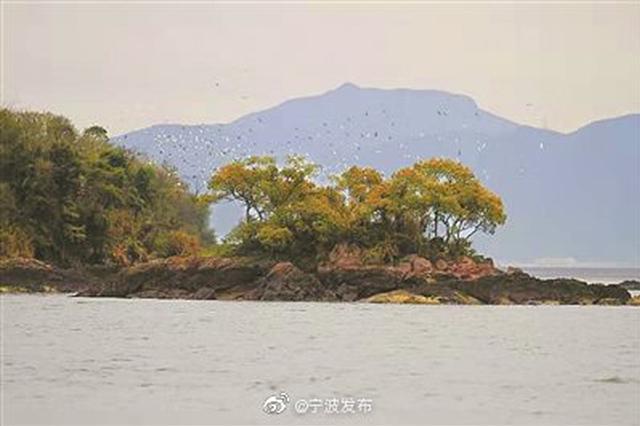 宁海湾成候鸟迁徙驿站 为迁徙鸟类提供丰富食物资源