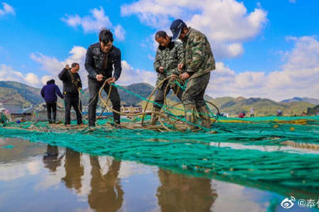 进入冬季无台风影响 奉化渔民修补渔网迎冬捕