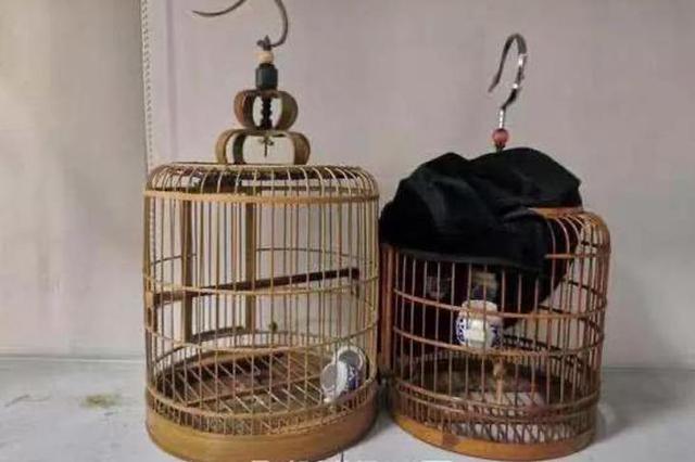 浙男子爱鸟如命加锁装监控与定位器 可小偷还是上门