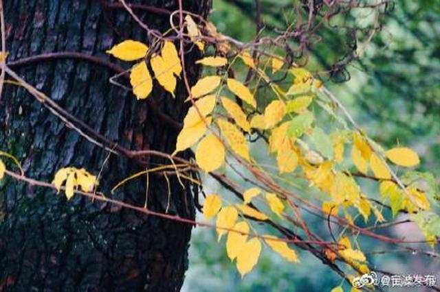 宁波卖鱼河畔落叶纷纷 树枝上尽留下最后一抹秋色