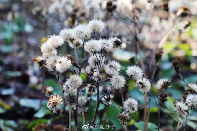 宁波小寒时节阳光明媚 中午气温冲破了23摄氏度