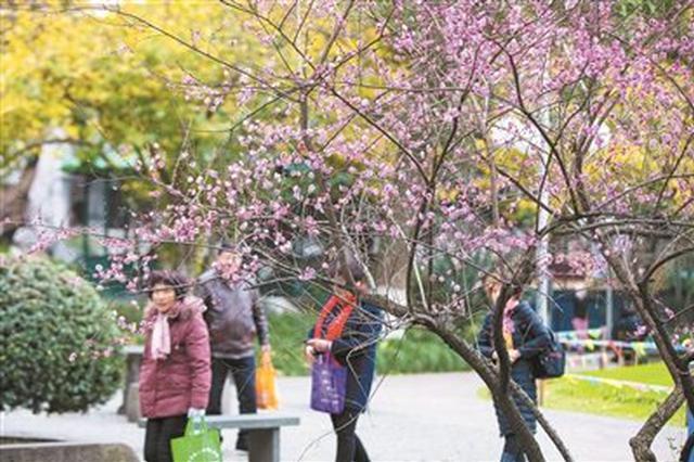 海曙中山公园红梅绽放枝头 为冬日里增添一抹亮色