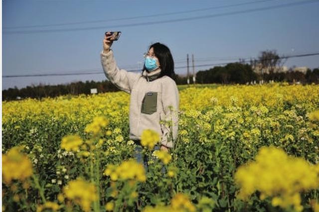 江北区庄桥街道姚家村8色油菜花开 满目灿烂春色正好
