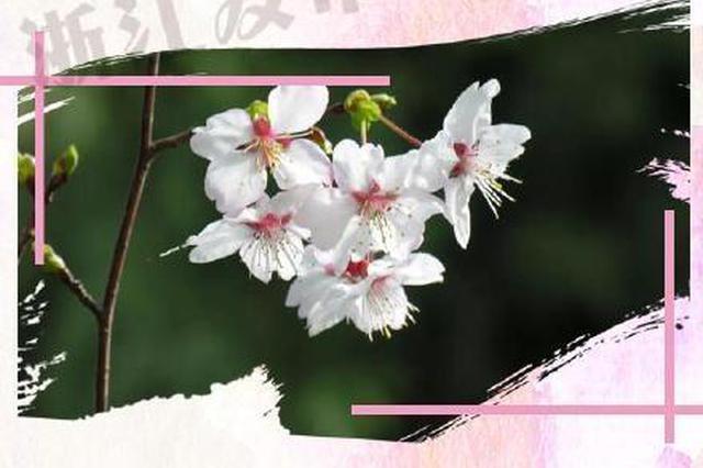眼下时节浙江野花开了 形色各异争相绽放迎春来