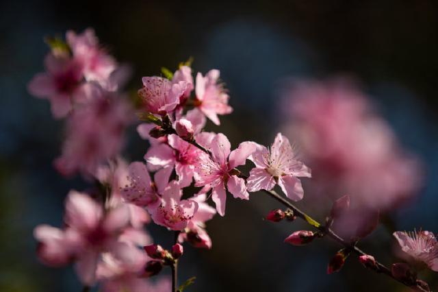 甬城阳光明媚春意融融 天一阁月湖景区绿意盎然