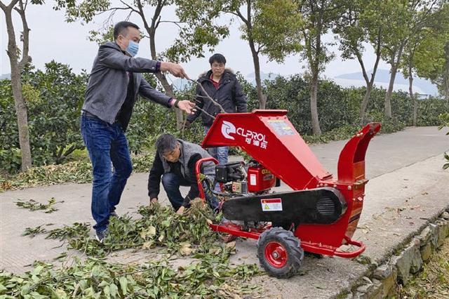 象山农户柑橘枝条粉碎还田 环保增肥绿色新举措