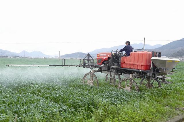 一年之计在于春 象山小麦种植基地织密病虫防控网
